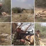 القائد العشريني الذي مرغ أنف الجيوش في جيزان وشمال صحراء ميدي… بقلم/ محمد عايش